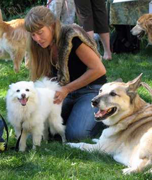 Rose De Dan offers Reiki to mini American Eskimo dog Q-tip www.reikishamanic.com