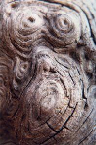 Pachamama Tree Bole, ©Rose De Dan www.ReikiShamanic.com