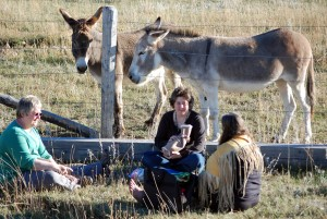 Burro Meeting A Walk on the Wild Side 2013 ©Rose De Dan www.reikishamanic.com