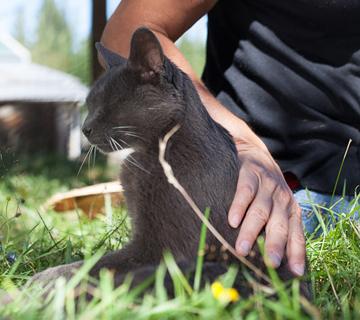 Rose De Dan offers Reiki to 21 year-old cat Viggo ©www.reikishamanic.com