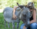 Miniature Donkey receives Reiki from Rose De Dan www.reikishamanic.com