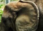 Elephant Profile, ©Debbie Noyes 2013 www.reikishamanic.com