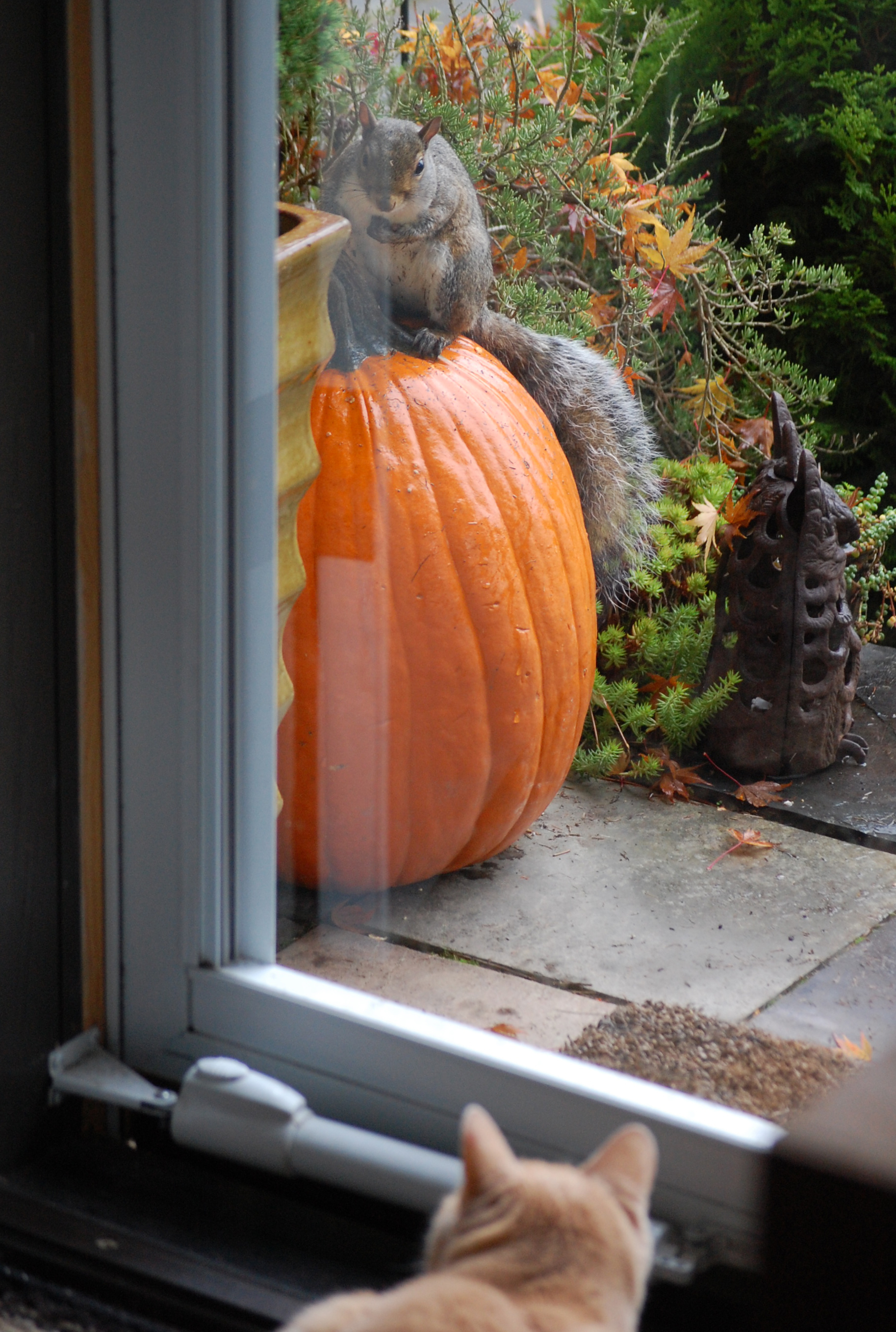 Squirrel on Pumpkin with Cat, ©2013 Rose De Dan www.reikishamanic.com