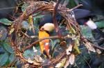 Toucan Wreath ©2013 www.reikishamanic.com