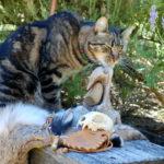 Manitou blesses Bones, Stones, Feathers and Fur ©2014 Rose De Dan
