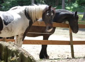 Shamara and Dante at Serenity Equine Rescue ©2014 Rose De Dan