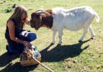 Reiki for Jake the Goat ©Rose De Dan www.reikishamanic.com
