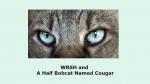 Wild Reiki and Shamanic Healing and A Half Bobcat Named Cougar, www.reikishamanic.com