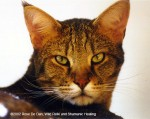 Cougar, ©2002 Rose De Dan, Wild Reiki and Shamanic Healing