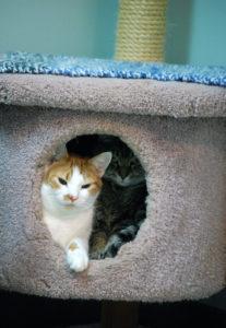 Dynamic Duo at MEOW Cat Rescue, ©Rose De Dan www.reikishamanic.com