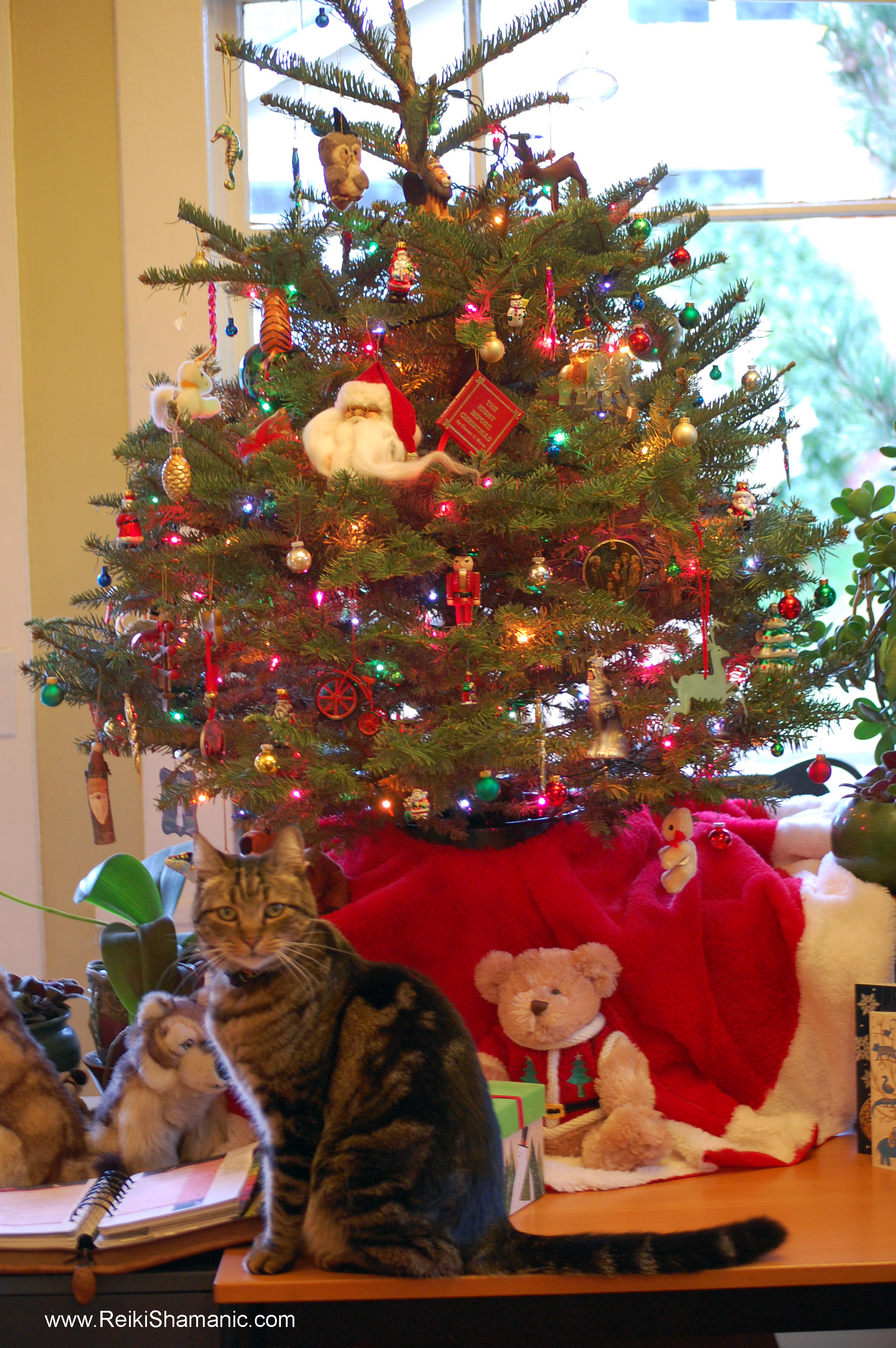 Manitou photobombs the Christmas Tree