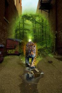 A Wild Way to Heal, ©Rose De Dan www.ReikiShamanic.com